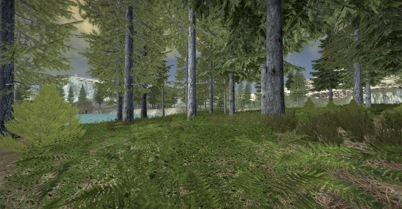 Alpine Forest Environment