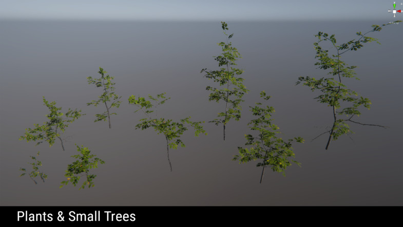 Forest Environment - Dynamic Nature