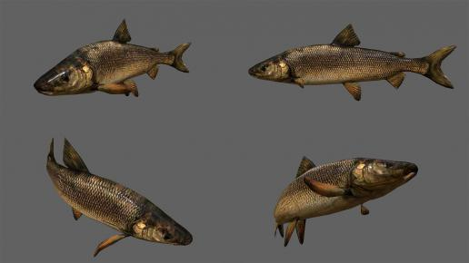 Low poly Fish Collection Animated Pack 4