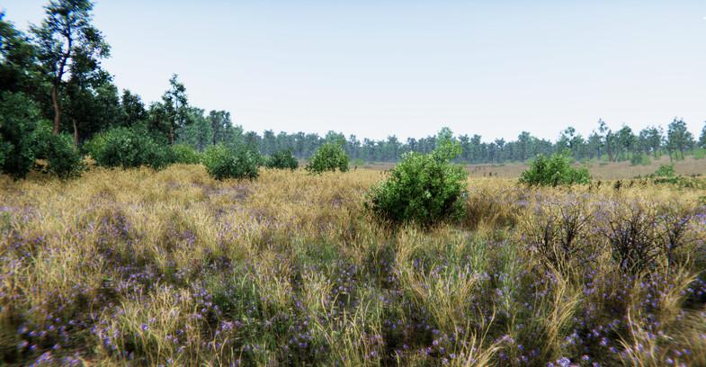 Oak Forest Environment