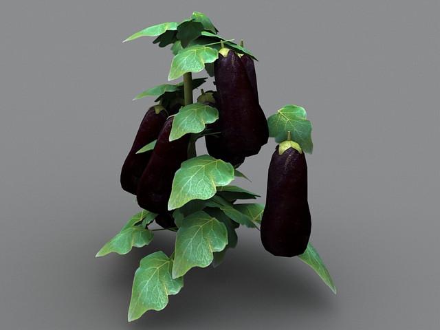 Vegetable Plants
