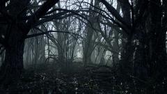 Dark Forest - Unity Asset