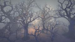 Dried trees - Unity Asset